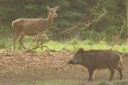 Wild observeren tijdens excursie Geldersch Landschap
