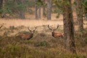 Wild maakt zich op voor een moeilijke winter